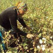 Мониторинг принудительного труда в рамках кампании по уборке хлопка в Туркменистане (часть I)