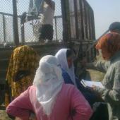 Мониторинг принудительного труда в рамках кампании по уборке хлопка в Туркменистане (часть II)