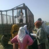 Monitoring of Forced Labor during Cotton Harvest Campaign in Turkmenistan (final part)