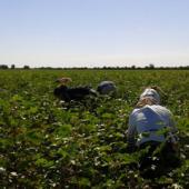 Мониторинг принудительного труда в рамках кампании по уборке хлопка в Туркменистане (часть III)