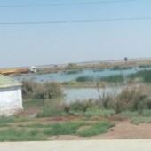 Паводок на Амударье