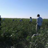 Дехканам повысили плату за использование пахотной земли в межсезонье