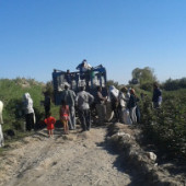 Turkmenistan Government Forces Thousands to Harvest Cotton