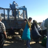 Turkmenistan's Low Cotton Crop Intensifies Officials' Use of Coercion