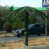 «Весь Туркменистан – сплошной театр»: В Балканабаде «выросли» искусственные пальмы