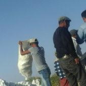 Хлопок-2016: Регионы рапортовали авансом, сбор урожая продолжается