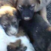 Ашхабад: Уничтожение домашних животных не прекращается