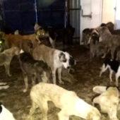 «Концлагерь» смерти. В Ашхабаде не прекращается уничтожение животных