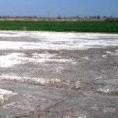 Соль на ранах земли. Некогда плодородные земли Дашогуза превращаются в безжизненную пустыню (фото)