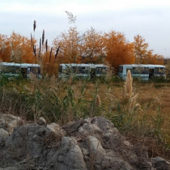 Turkmenistan: Bus Crash Injures Dozens of Cotton Pickers