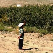 Teachers in Turkmenistan forced to pick cotton during fall break