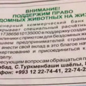 В Туркменистане объявлен сбор средств на создание ветеринарной клиники с приютом